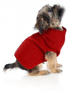 Online Sale Alert! Brooks Brothers Doggie Gear 50 Percent Off