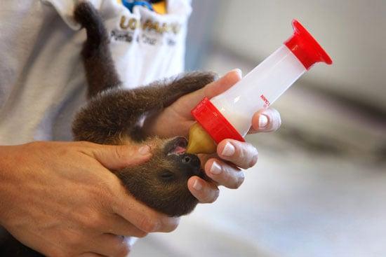 Bimba and Hugo's Sloth Babies