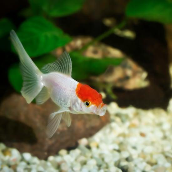 7 Reasons You Might Really Need a Fish