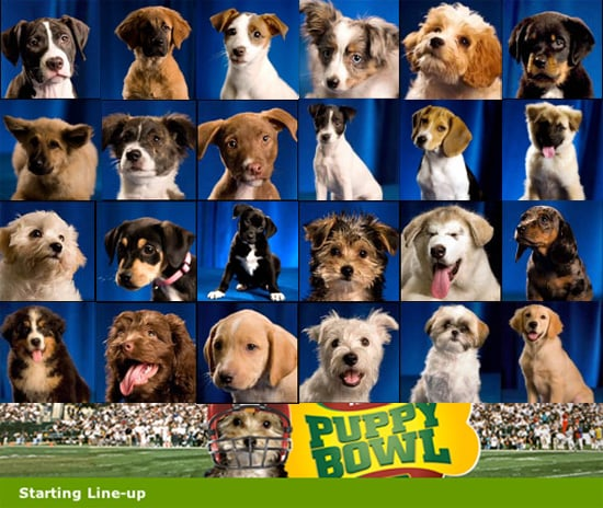 These Dogs are Ready to Rumble