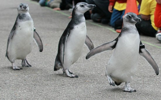 Pictures of the March of the Penguins