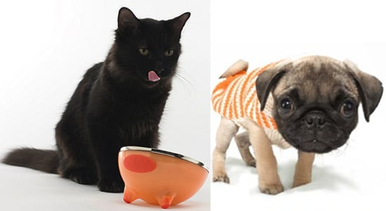Treat a Pet to Something Orange!