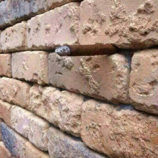 Brick Wall Optical Illusion Photo