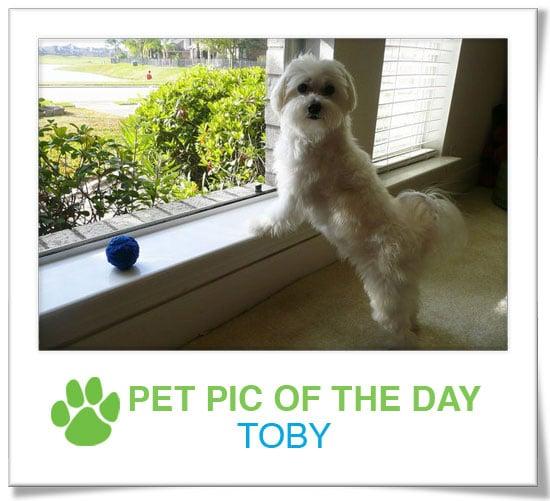 Pet Pics on PetSugar 2009-03-12 09:30:39