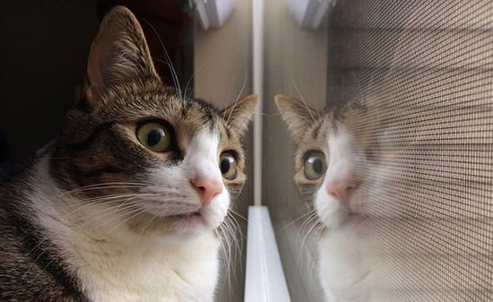 "8 Shows Cats Would Watch Through the ""Cat TV"" Window"