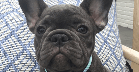 We Need To Talk About Reese Witherspoon's New Puppy