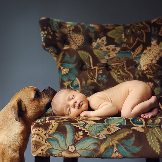 These 34 Newborns and Their Furry Best Friends Are the Best Things You'll See in 2016