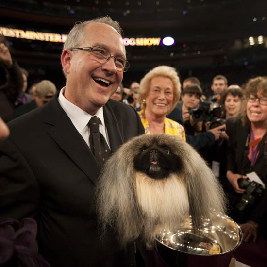 Breeds Who Have Won Westminster Dog Show More Than Once