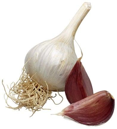 Garlic Fun Facts
