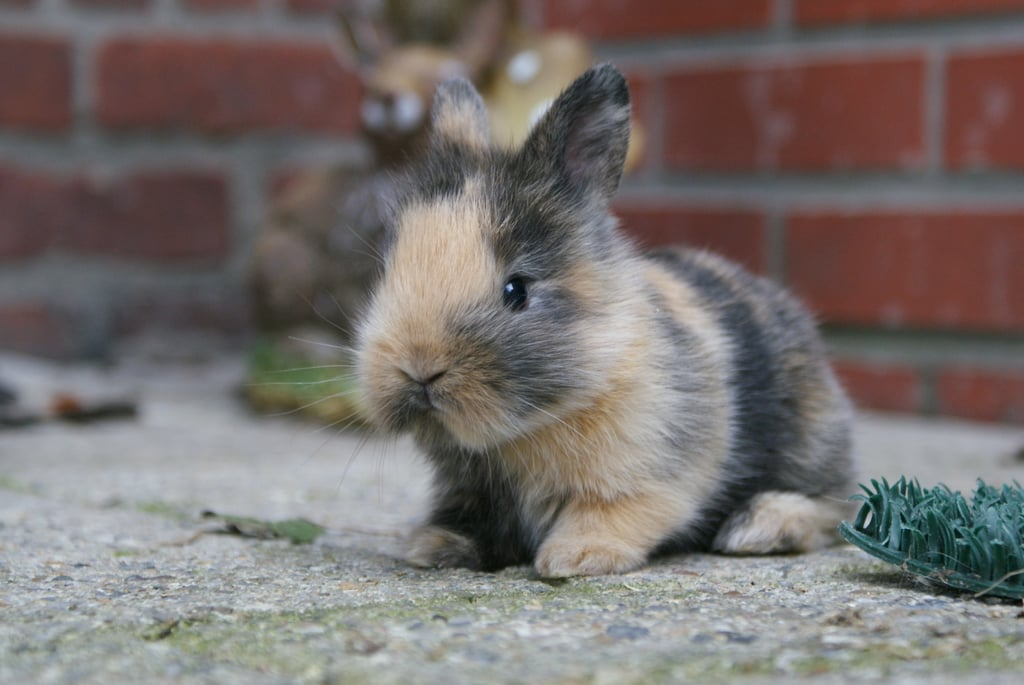 You say Easter is around the corner? Well, hop to it, people! Source: Flickr user jpockele