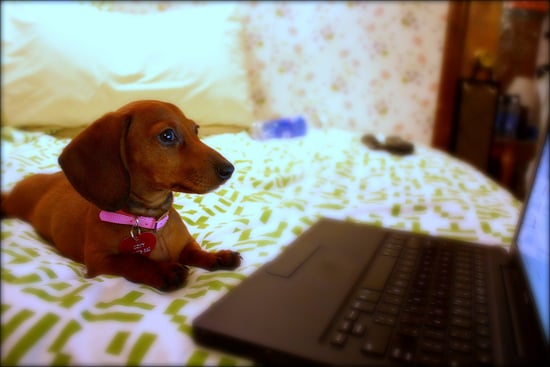 Set Up Your Own Puppy Cam in 6 Easy Steps