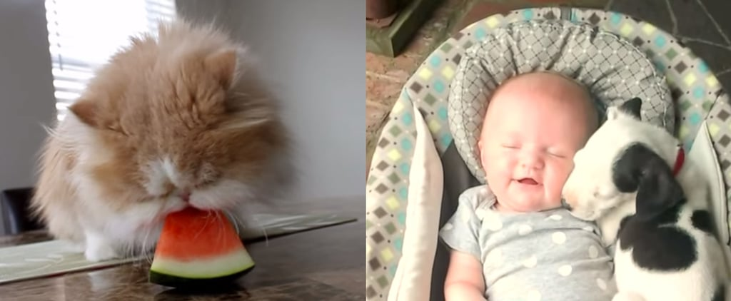 The Best Pet Videos For Your Coffee Break