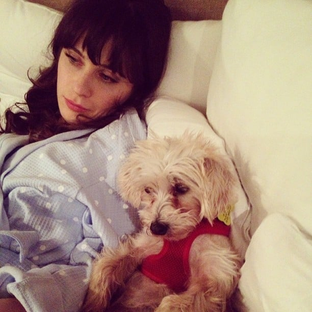 Zoey Deschanel lounged about with her pup. Source: Instagram user zooeydeschanel