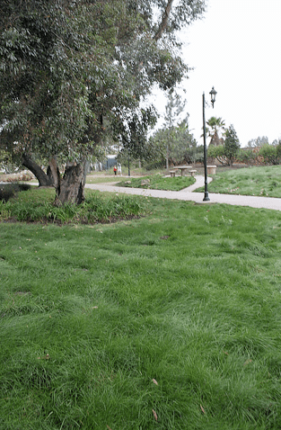 Eco-Lawn From Wildflower Farms Provides Beautiful, Drought-Resistant Lawns