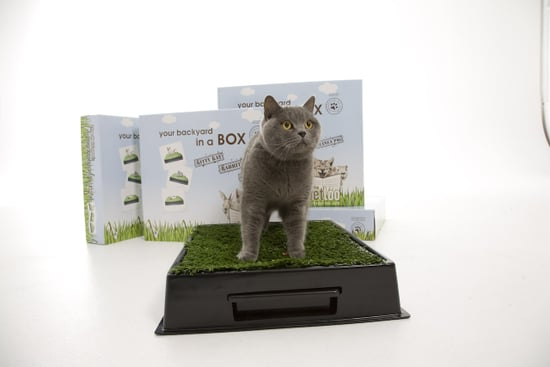 Would Your Cats Use the Kitty Kat?