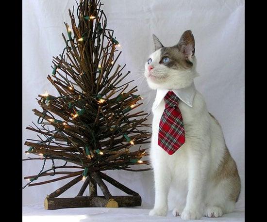 Christmas Tartan Ties