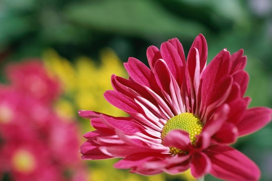 Six Perennials With Late-Flowering Habits