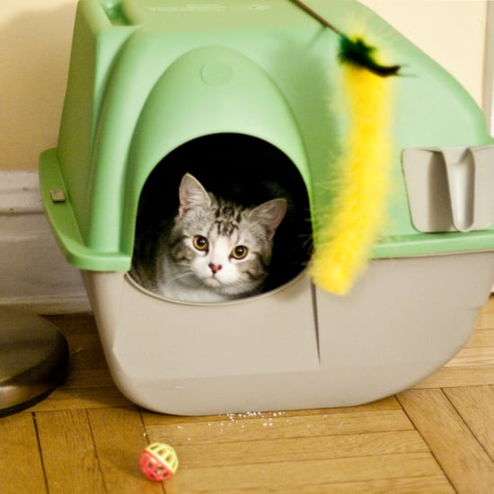 Kick the Scoop to the Curb! 5 Self-Cleaning Litter Boxes