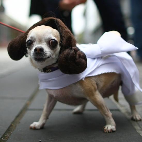 Creative Dog Costumes