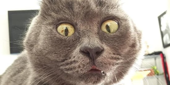 Cat With Perpetually Surprised Face Survives Against All Odds