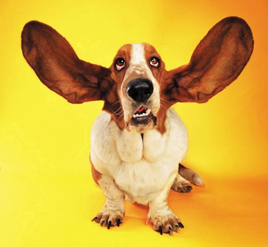 Pet Peeves: My Dog Has Dirty Ears