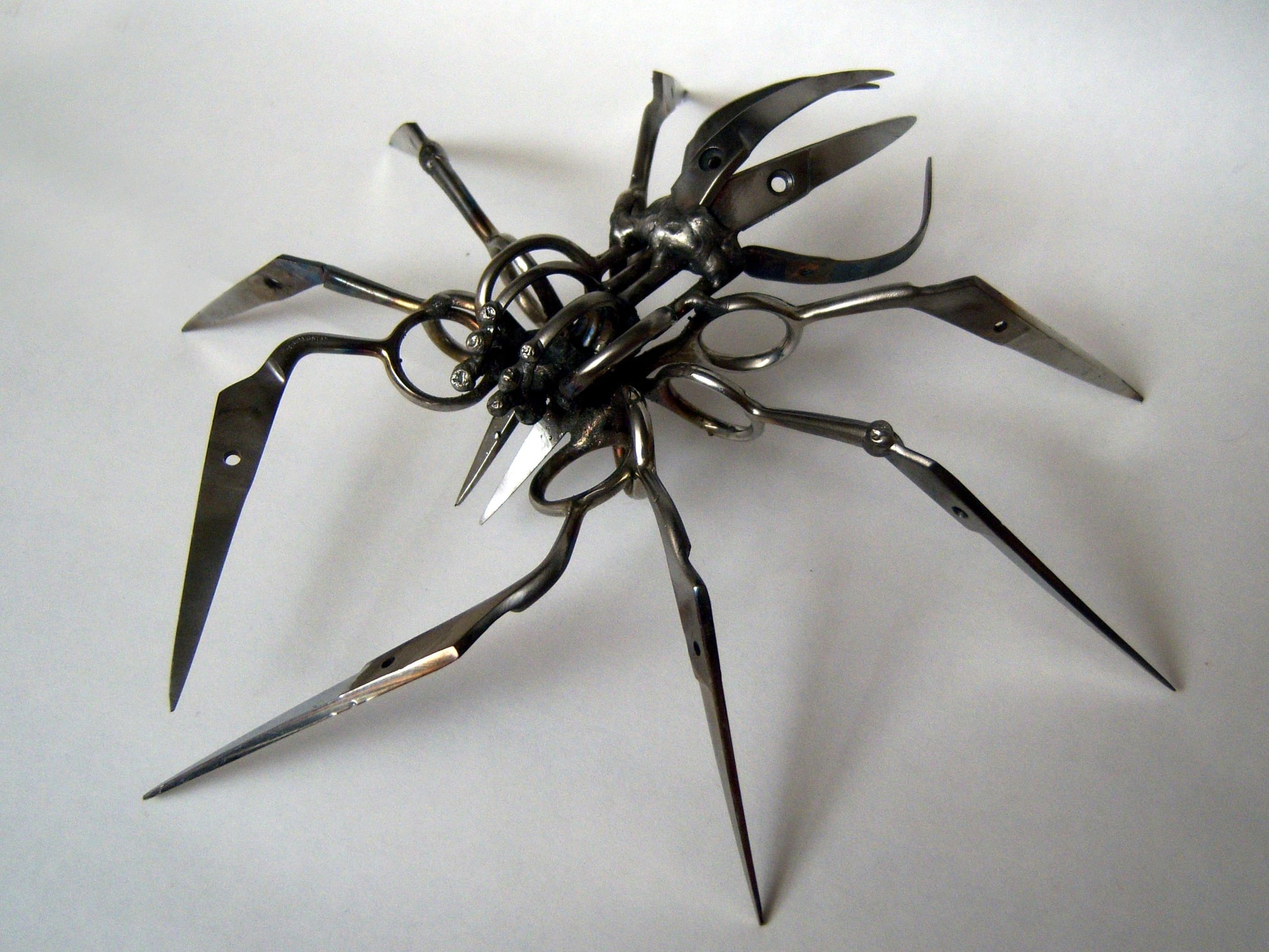Wild Art: Scissor Spiders