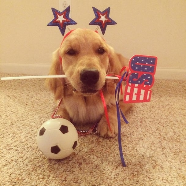 Cupcake the Golden Retriever has her own personal soccer ball. Source: Instagram user cupcakethegolden