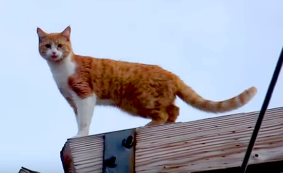 Miss Kitty Was Rescued After Four Days Atop a Power Pole