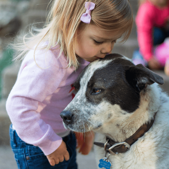 """Saying Your Dog Is Your """"Baby"""" Is an Insult to Moms Everywhere"""