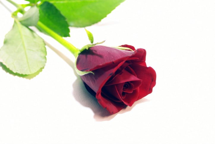 """Pick up a bouquet of red roses at the grocery store. When your friends arrive, open the door with a flourish while holding a single red rose. Greet them by saying, """"Will you accept this rose?"""" Your friends can take the roses home with them at the end of the night as party favors."""