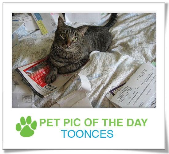 Pet Pics on PetSugar 2008-11-13 09:30:12