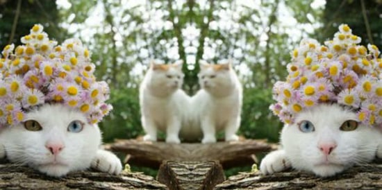 2 Cats Present Your Love Horoscope (THEY ARE PSYCHIC)