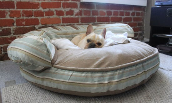 Does Your Pet Have a Bed That's Too Big?