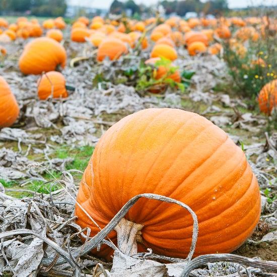 Student Loan Pumpkin Carving