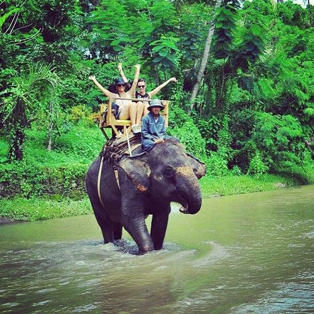 Ride an Elephant in Chiang Mai