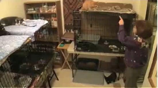 Cat Lady Documentary