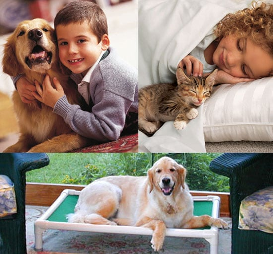 Win an Iams Package For Your Cat or Dog and Two Kuranda Beds For Shelter Pets