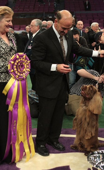 Stump the Sussex Spaniel wins the 133rd Westminster Kennel Club Dog Show in 2009 2009-02-11 09:53:46