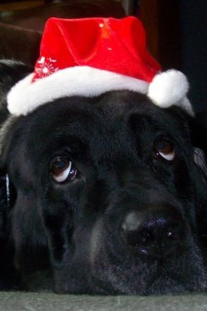Pet Pic of the Day: Santa's Little Helper