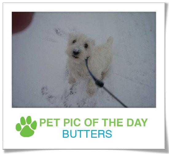 Pet Pics on PetSugar 2008-12-29 09:30:00