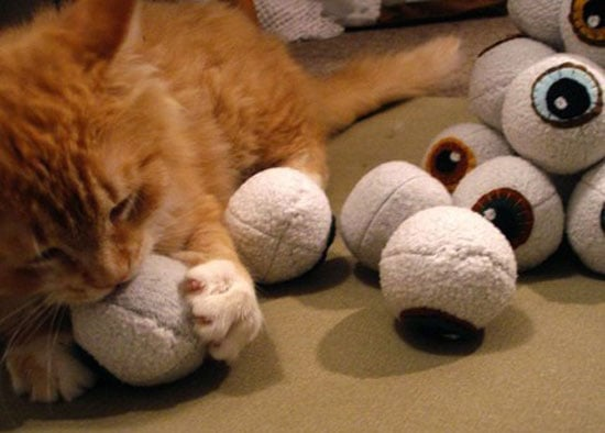 I've Got My Eye on You, Kitty