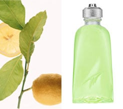 Definition of Citrus in the Fragrance Group