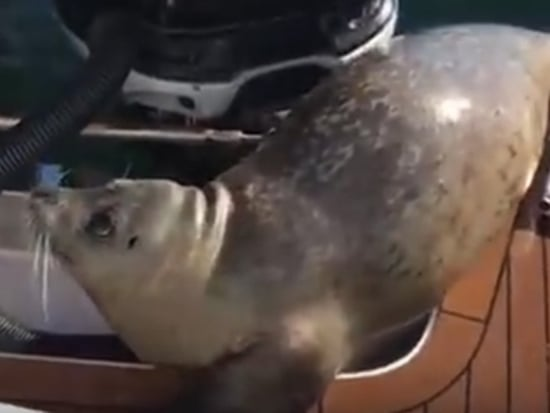 WATCH: Seal Hitches Ride on Whale-Watching Boat to Avoid Whales