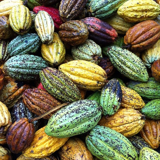 Colorful Cacao