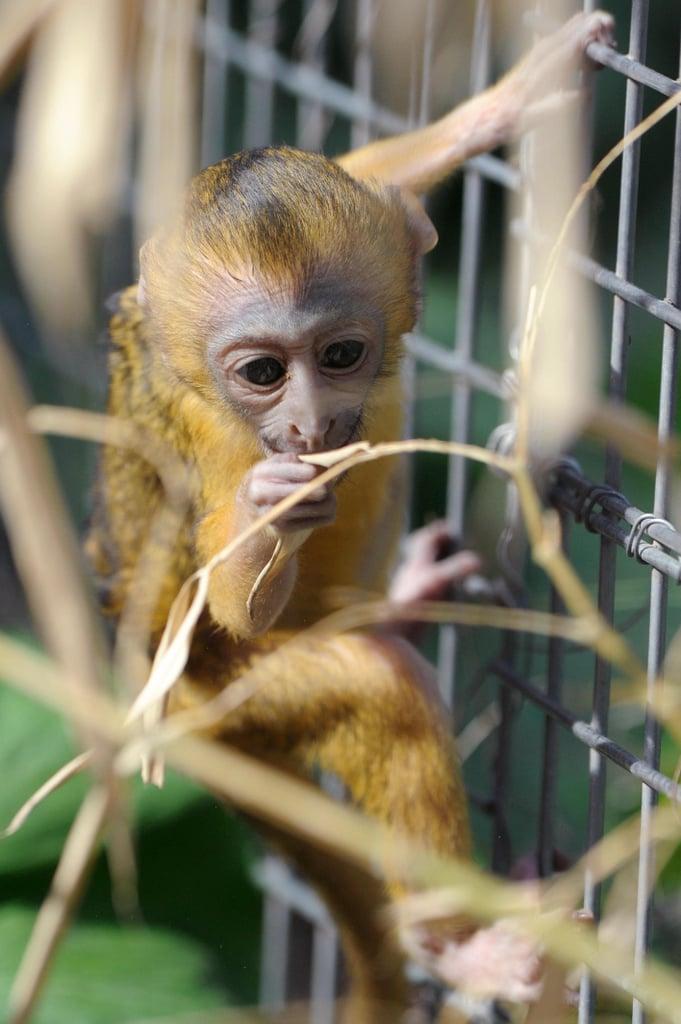 Owl-Faced Monkey Baby!
