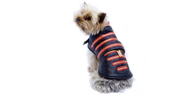 Spend Big for your Pooch with Manfred of Sweden