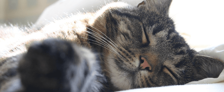 It's World Cat Day! Cuddle Up With These Sleepy Kitties
