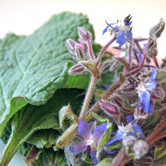 Uses For Borage
