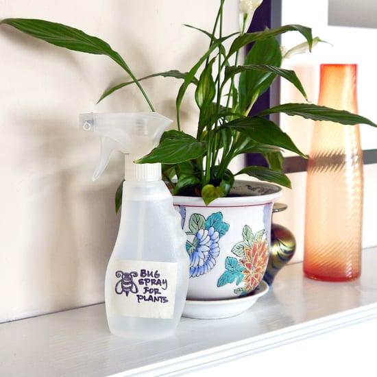 Eco-Friendly Bug Spray For Plants