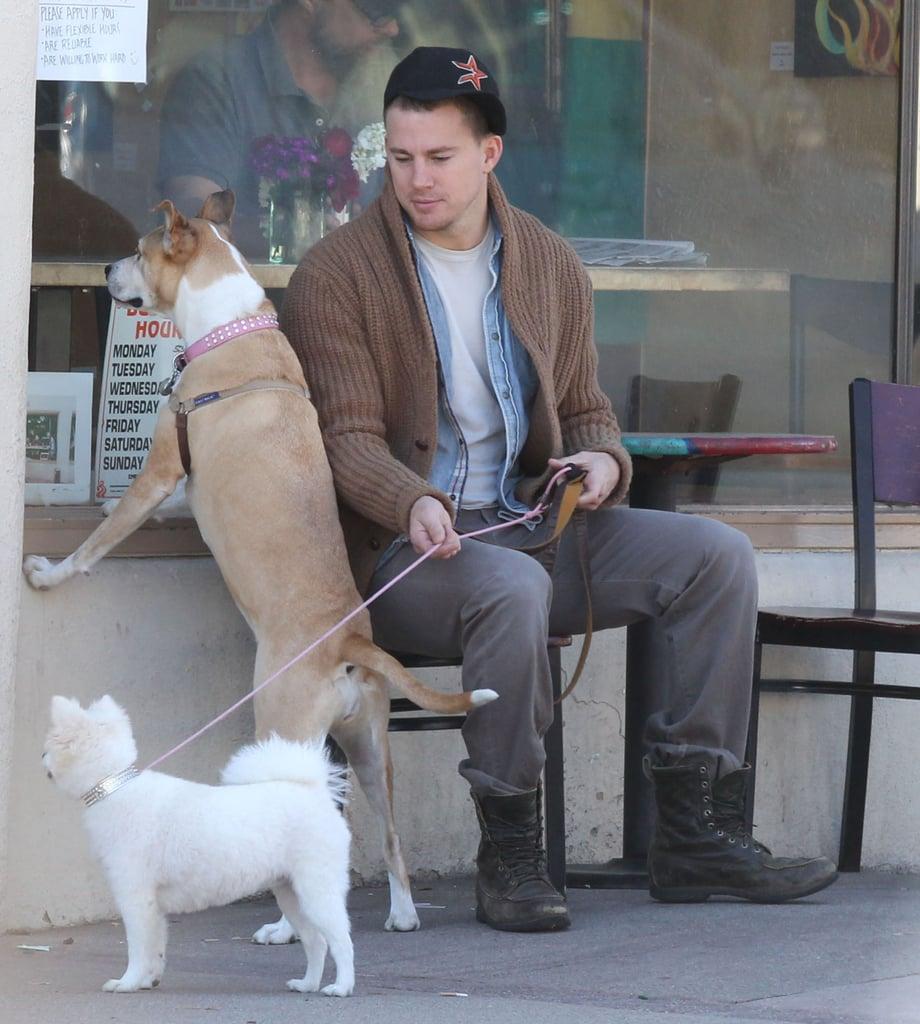 Channing Tatum's rescue pup, Lulu, and his wife Jenna Dewan's pretty pooch, Meeka, waited outside for her in Santa Barbara, CA, in February 2013.